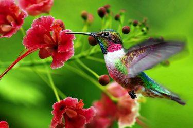 piękny ptaszek super zdjęcie