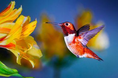piękny ptaszek super zdjęcie dobry fotograf to robił